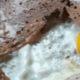 Ariane Grumbach - L'art de manger